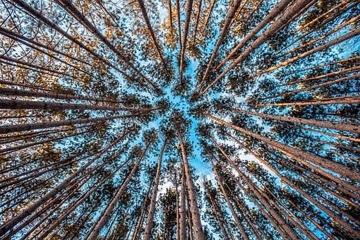 Firmy wycinające drzewa