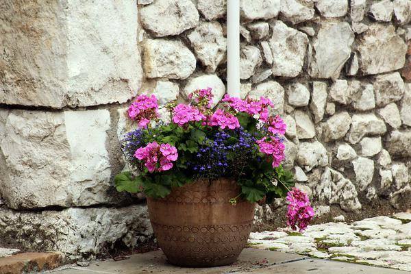 Rośliny do domu